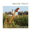 Trout Walter- Common Ground